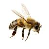 Čebelarstvo Boštjan Punčuh
